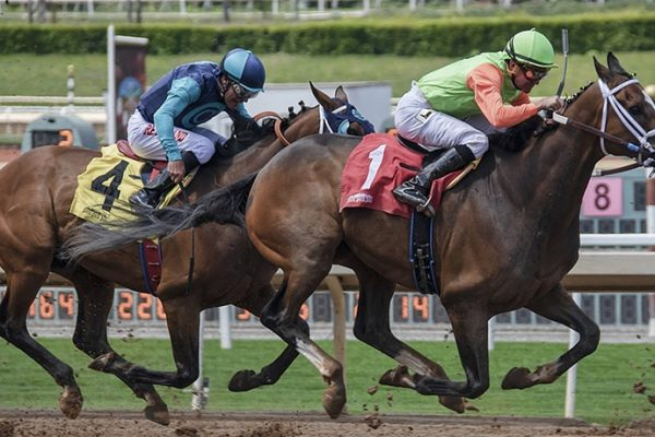 Do Horse Racing Exist Only Because of the Betting?
